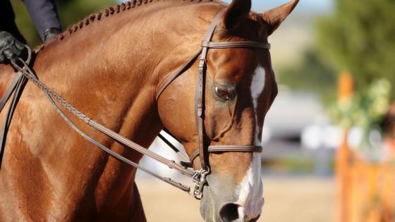 Horse Grooming Gloves